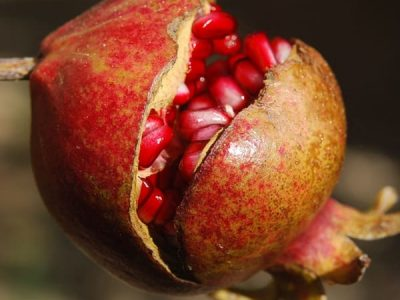 Skin Care Living - Pomegranate Seed Oil for skin